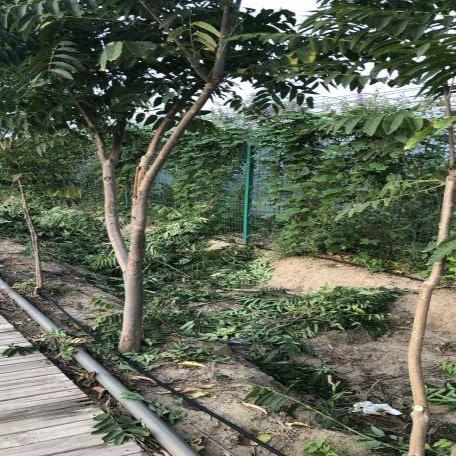 【农业用水精细化管理专题】城市绿地再生水回用安全调控滴灌技术